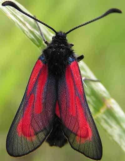 Как бабочки защищаются от хищников   наука и жизнь.