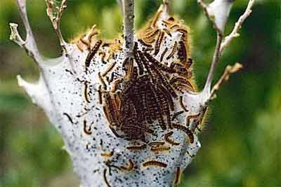 Названия Бабочек фото бабочек с названиями
